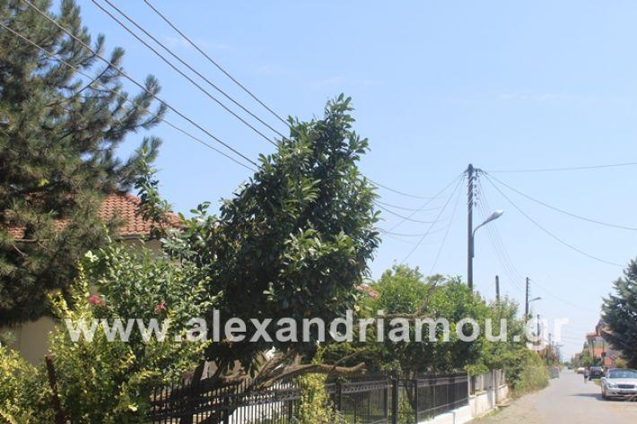 alexandriamou.gr_kolonaampelotopia2019002