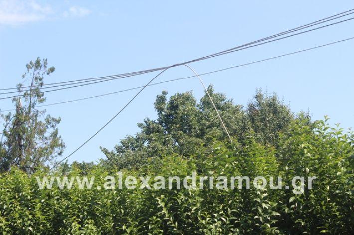 alexandriamou.gr_kolonaampelotopia2019012
