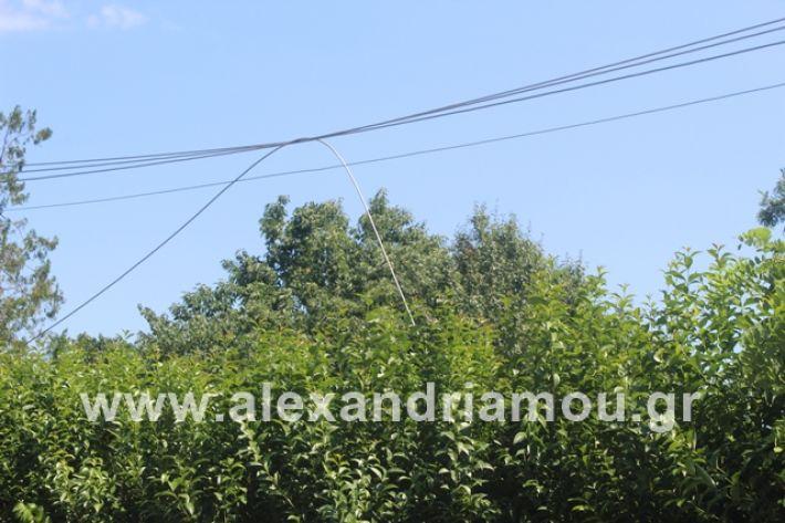 alexandriamou.gr_kolonaampelotopia2019014