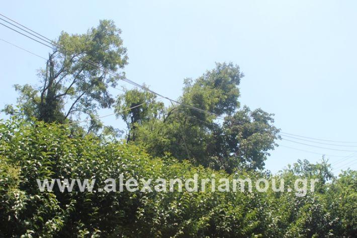 alexandriamou.gr_kolonaampelotopia2019018