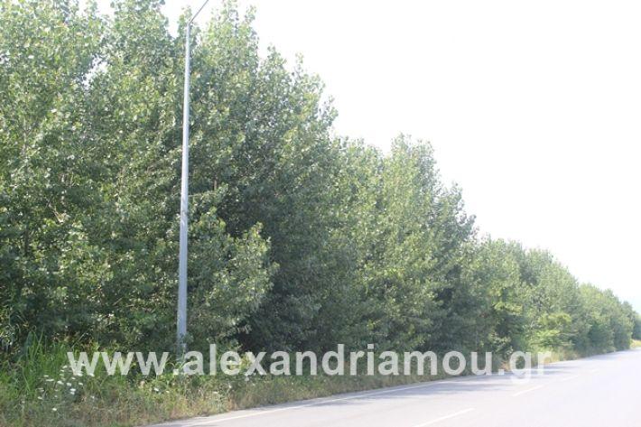 alexandriamou.gr_leukespeo2019005