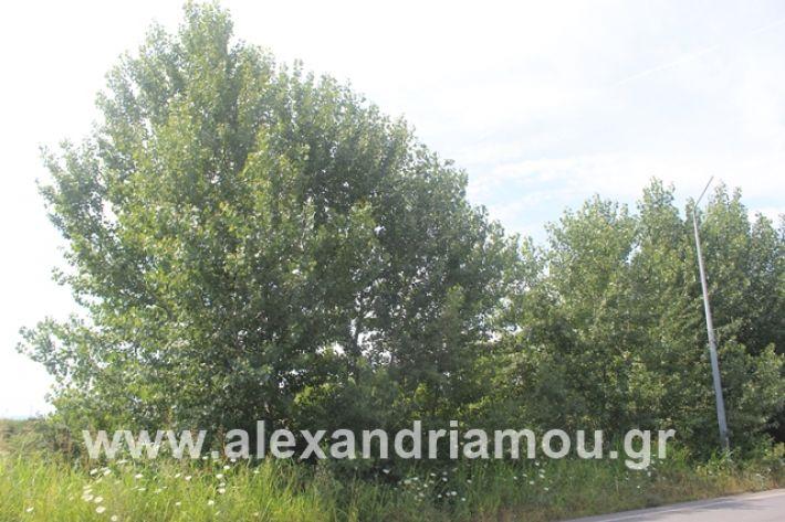 alexandriamou.gr_leukespeo2019006