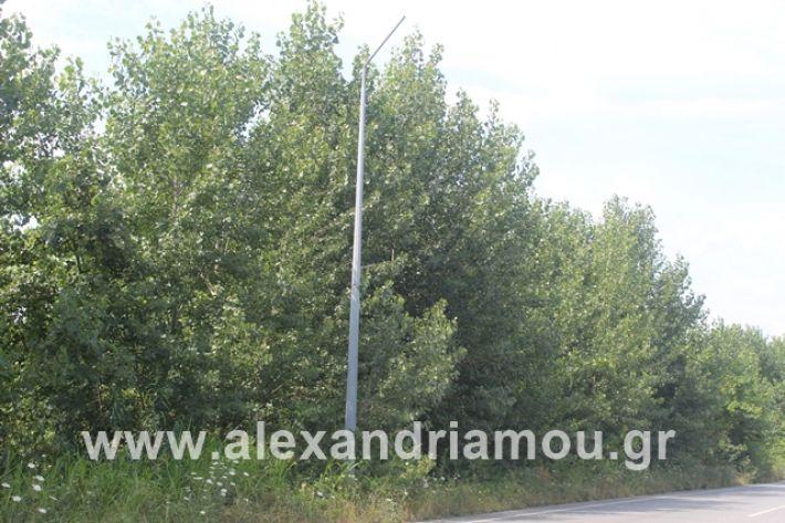 alexandriamou.gr_leukespeo2019007