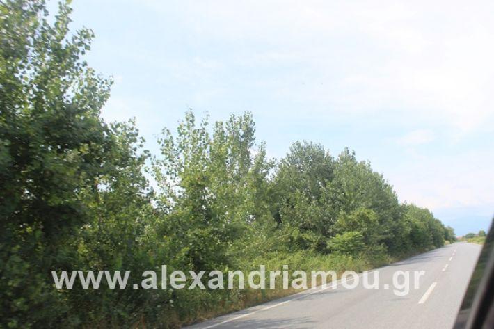 alexandriamou.gr_leukespeo2019009