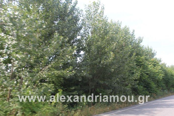 alexandriamou.gr_leukespeo2019011