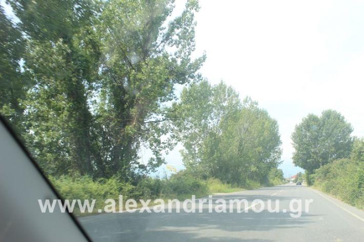 alexandriamou.gr_leukespeo2019021