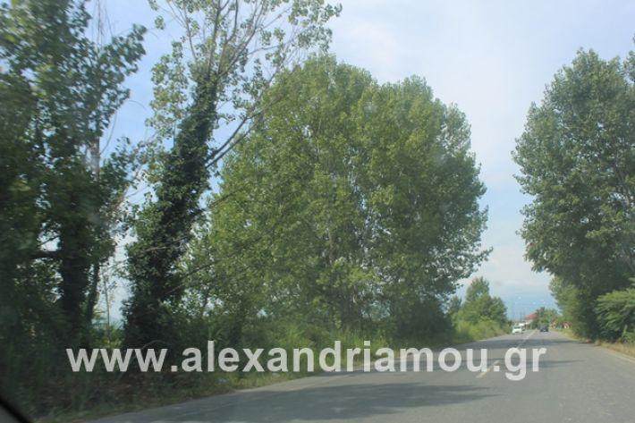 alexandriamou.gr_leukespeo2019022