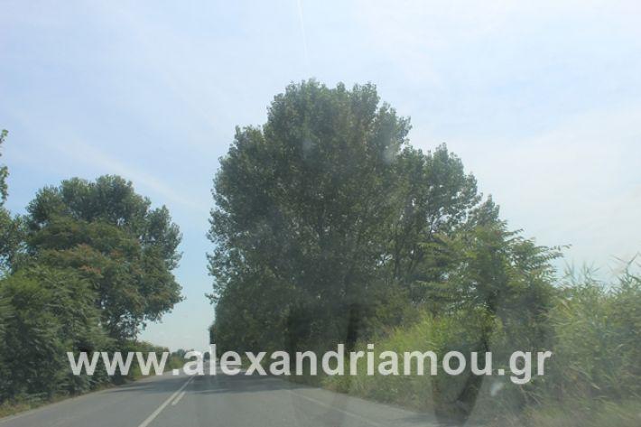 alexandriamou.gr_leukespeo2019025