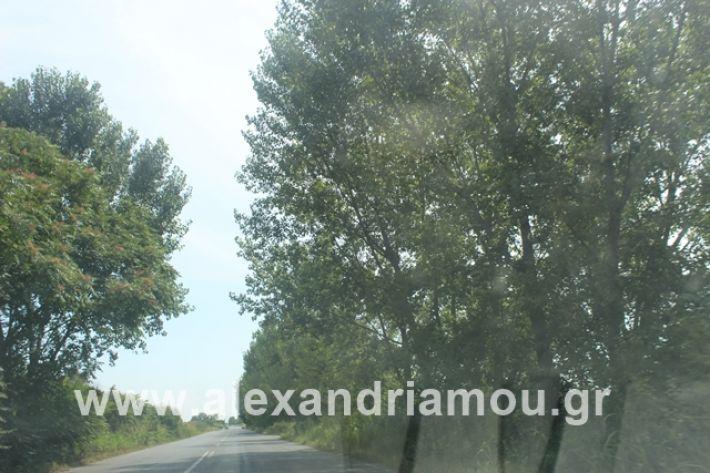 alexandriamou.gr_leukespeo2019026
