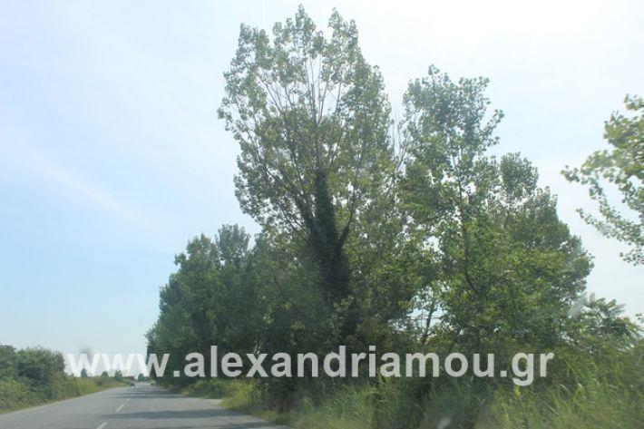 alexandriamou.gr_leukespeo2019027