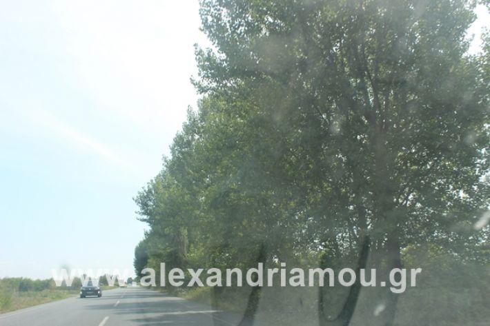 alexandriamou.gr_leukespeo2019029