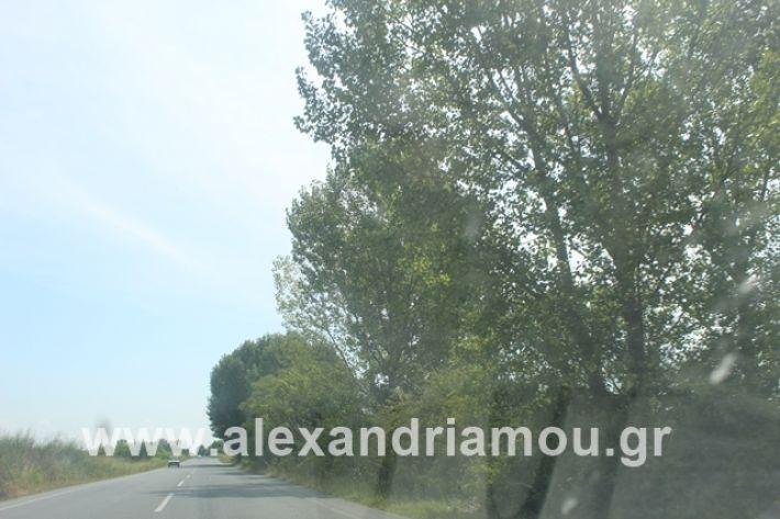 alexandriamou.gr_leukespeo2019031