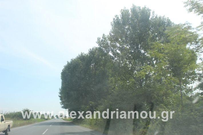 alexandriamou.gr_leukespeo2019033
