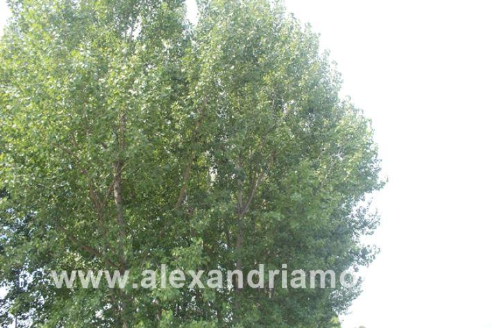 alexandriamou.gr_leukespeo2019034