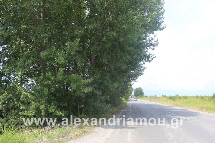 alexandriamou.gr_leukespeo2019035