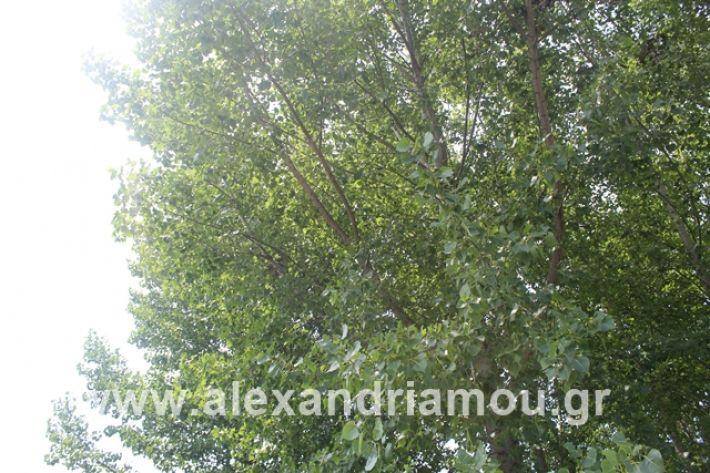 alexandriamou.gr_leukespeo2019037
