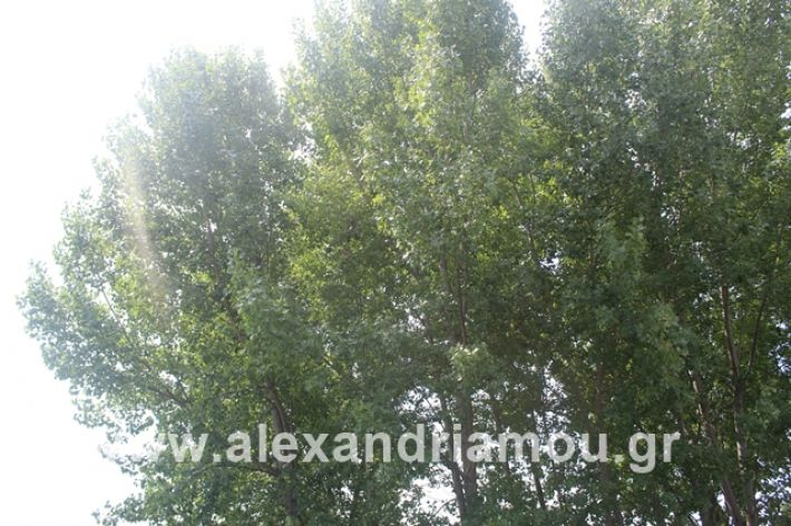 alexandriamou.gr_leukespeo2019039