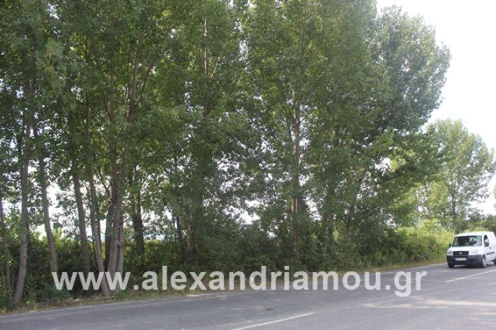 alexandriamou.gr_leukespeo2019041