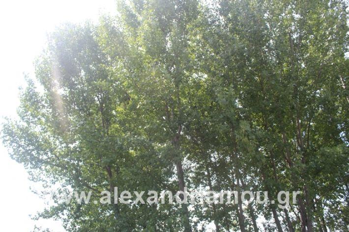 alexandriamou.gr_leukespeo2019043
