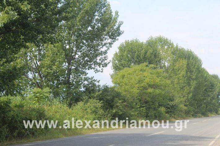 alexandriamou.gr_leukespeo2019045