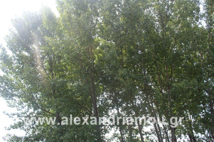 alexandriamou.gr_leukespeo2019046