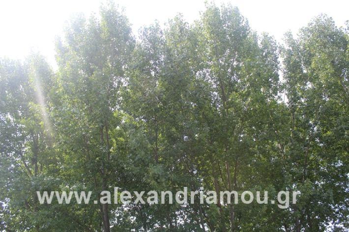 alexandriamou.gr_leukespeo2019047