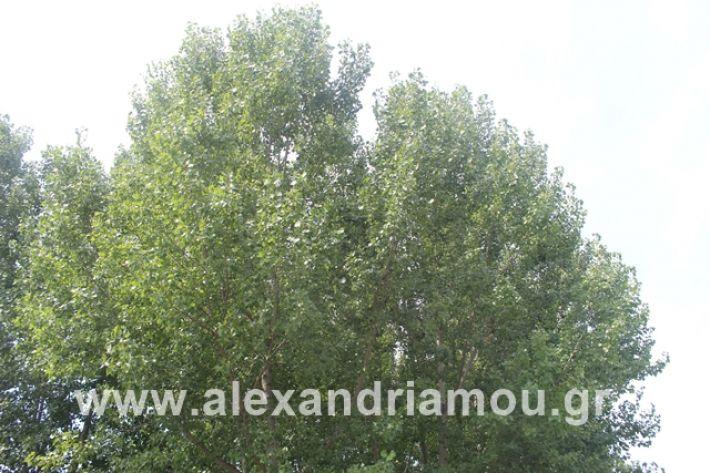 alexandriamou.gr_leukespeo2019051