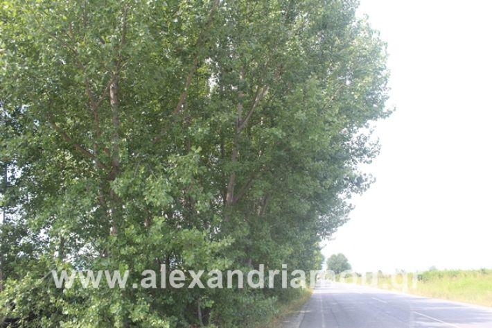 alexandriamou.gr_leukespeo2019053