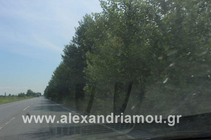 alexandriamou.gr_leukespeo2019054