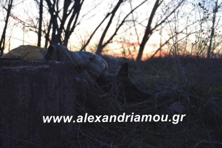 alexandriamou.likosplatei002