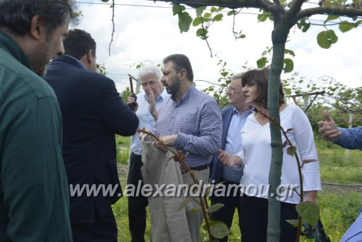 alexandriamou_araxobitis2019112
