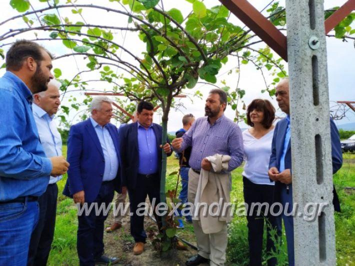 alexandriamou_araxobitis2019122