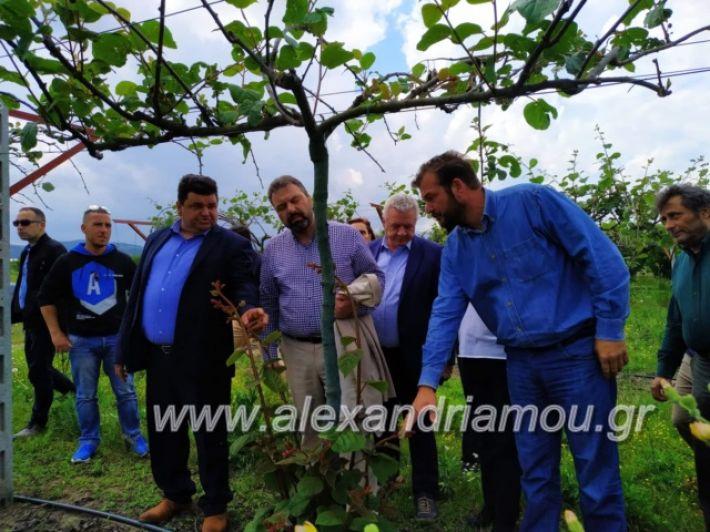 alexandriamou_araxobitis2019127
