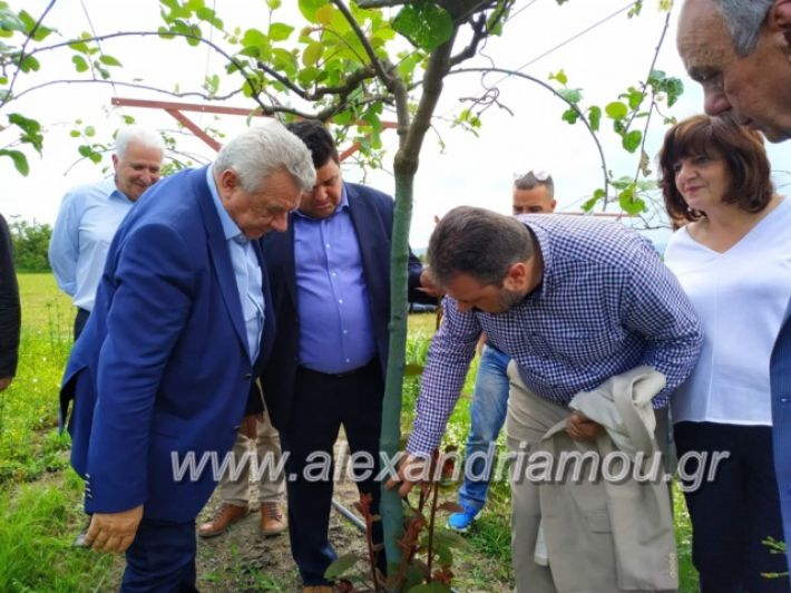 alexandriamou_araxobitis2019131
