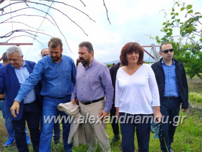 alexandriamou_araxobitis2019133