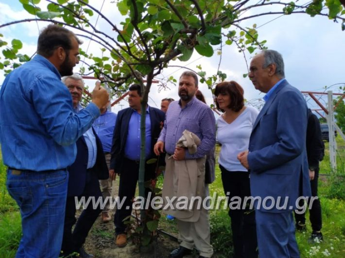 alexandriamou_araxobitis2019139