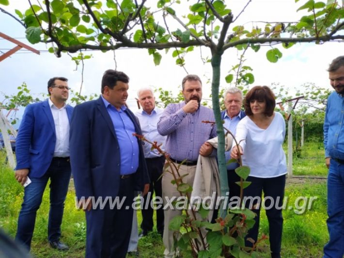 alexandriamou_araxobitis2019141