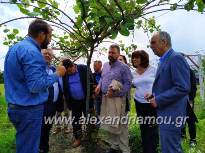 alexandriamou_araxobitis2019142