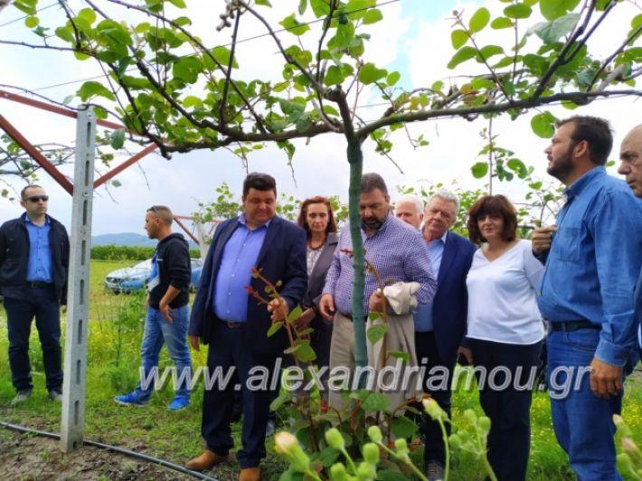 alexandriamou_araxobitis2019146