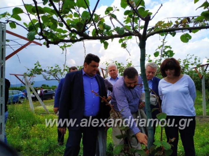 alexandriamou_araxobitis2019147