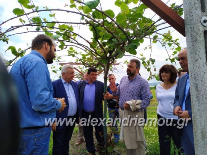 alexandriamou_araxobitis2019150