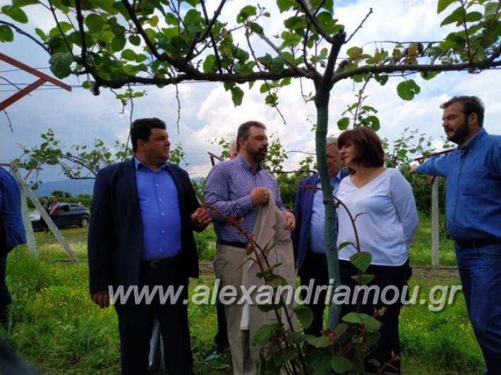 alexandriamou_araxobitis2019151