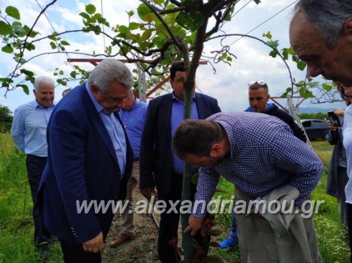 alexandriamou_araxobitis2019152