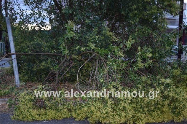 alexandriamou.gr_mpourini1201900006