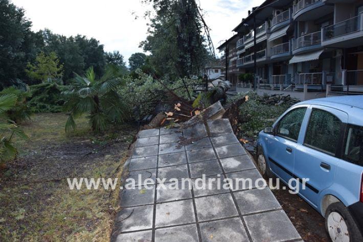 alexandriamou.gr_mpourini1201900010