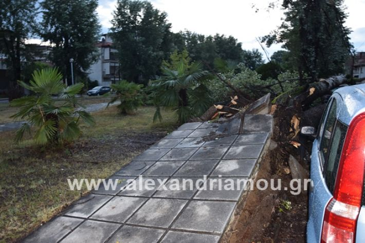 alexandriamou.gr_mpourini1201900012
