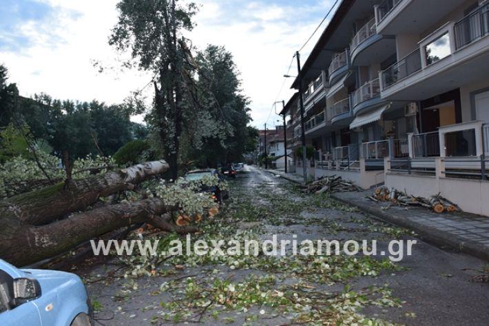 alexandriamou.gr_mpourini1201900013