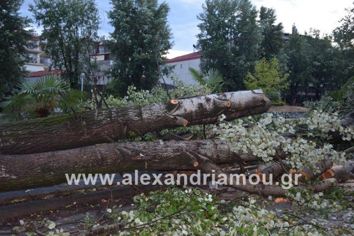 alexandriamou.gr_mpourini1201900015