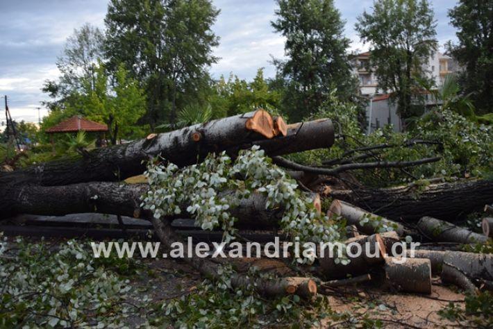 alexandriamou.gr_mpourini1201900017
