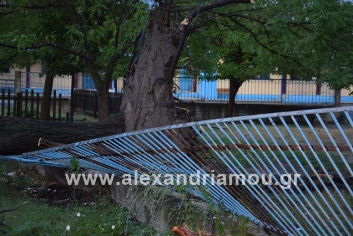 alexandriamou.gr_mpourini1201900026